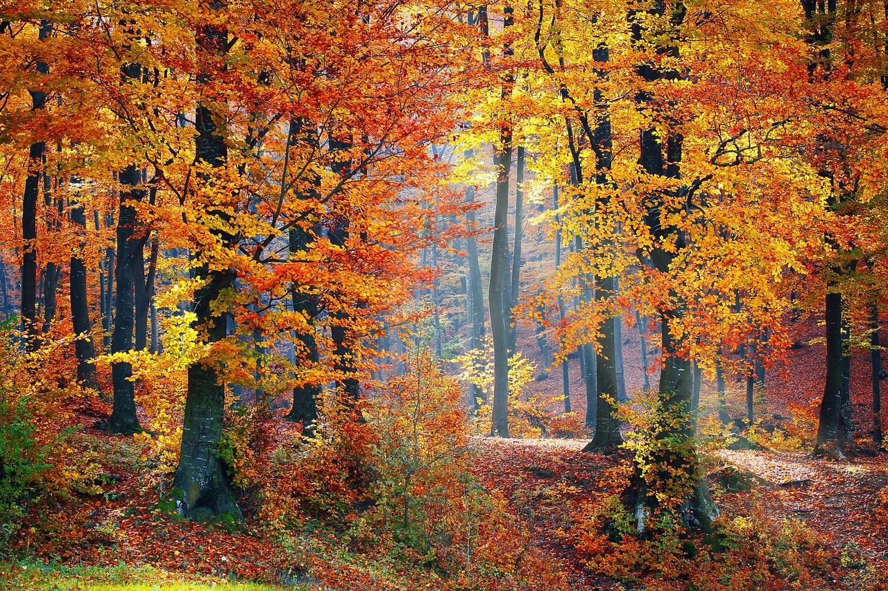 Acceuillir l'arrivée de l'automne