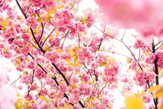 Energie nouvelle du printemps - Divindia