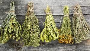plantes ayurvédiques - divindia