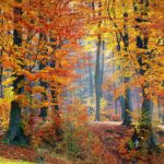 Accueillir en douceur l'arrivée de l'automne