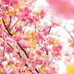 Conseils ayurvédiques pour l'arrivée du printemps