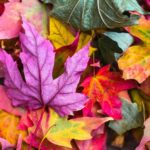 Automne & Alimentation – Conseils ayurvédiques