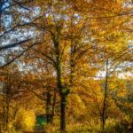 Conseils ayurvédiques pour l'automne