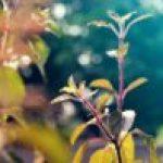 Phytotérapie-ayurvédique-Lisa-Charlin-min-e1472928632274